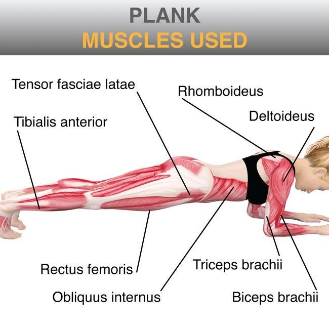 Muscles used while planking
