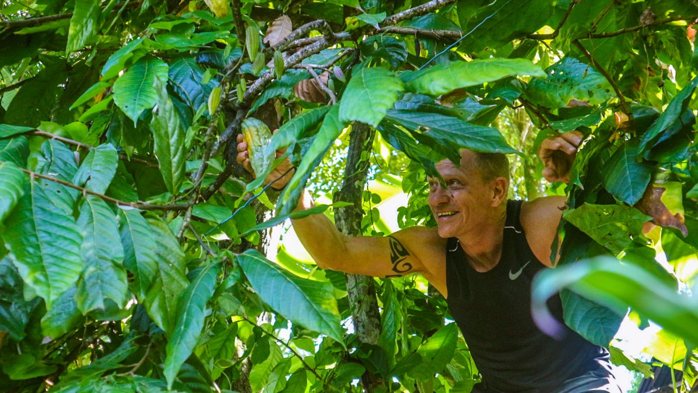 picking cacao