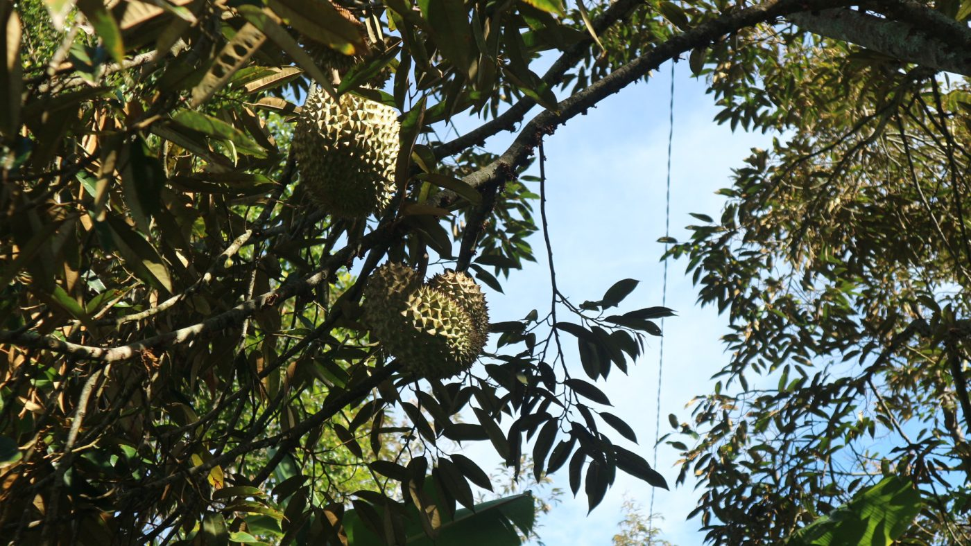 Durian fruit is smelly and the tase is strange.